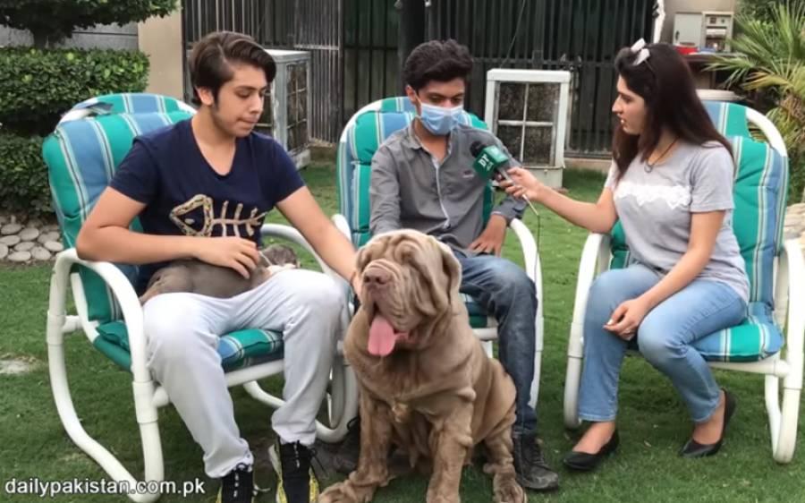16 اور 17 سال کے 2 لڑکے جنہوں نے 35 مہنگے ترین کتے پال رکھے ہیں