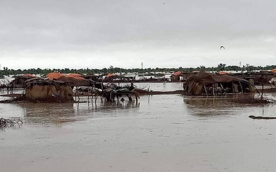 ضلع دادو میں سیلابی ریلا، مویشی پانی میں بہہ گئے، دل دہلا دینے والی ویڈیو