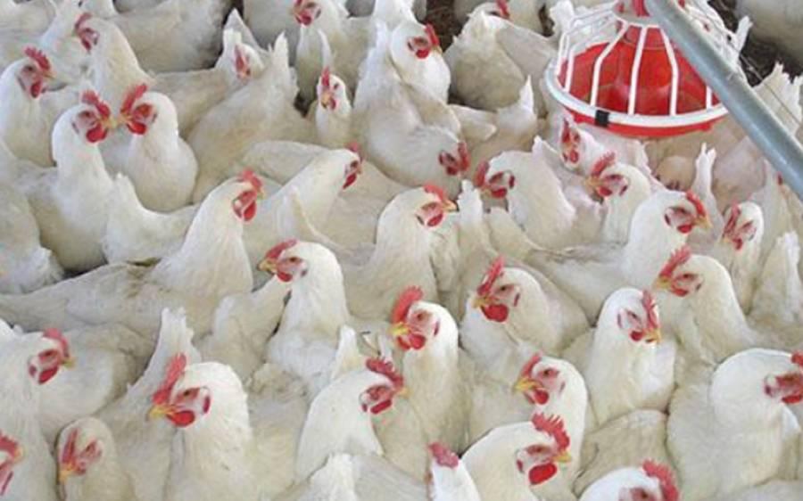آئندہ سال مئی جون میں مرغی کا گوشت کتنے روپے کلو فروخت ہوگا؟پولٹری ایسوسی ایشن نےبم پھوڑ دیا