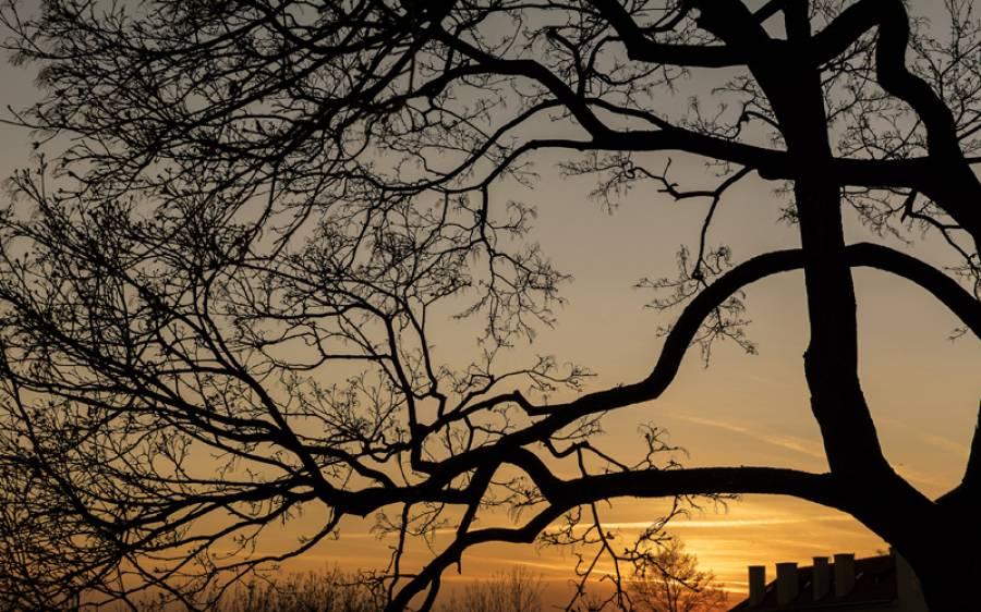 فصلوں اور درختوں کی شاخیں کاٹ کر جلانے پر دفعہ 144 نافذ کرنے کا حکم