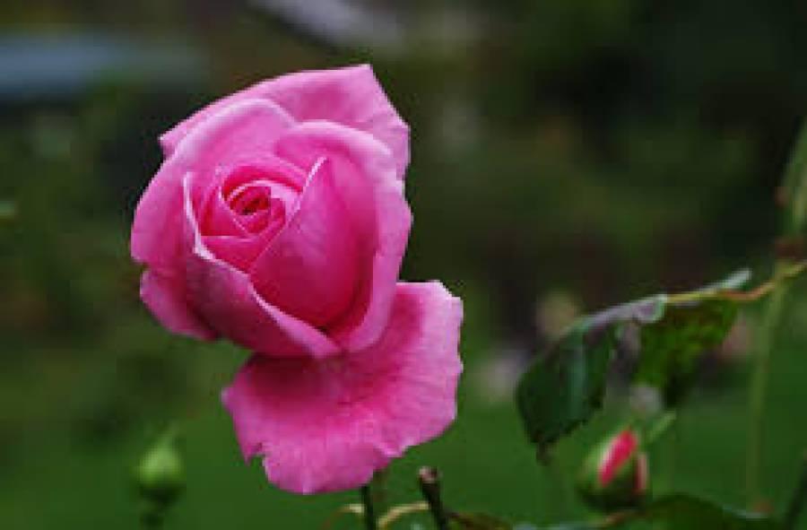 گئے موسم میں جو کھِلتے تھے گلابوں کی طرح