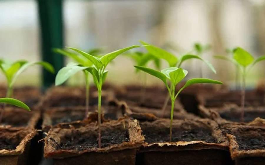 کیا آپ کو معلوم ہے پودے اپنے رشتہ داروں کو پہچان سکتے ہیں اور انہیں گنتی بھی آتی ہے؟ انتہائی حیران کن حقائق جانئے