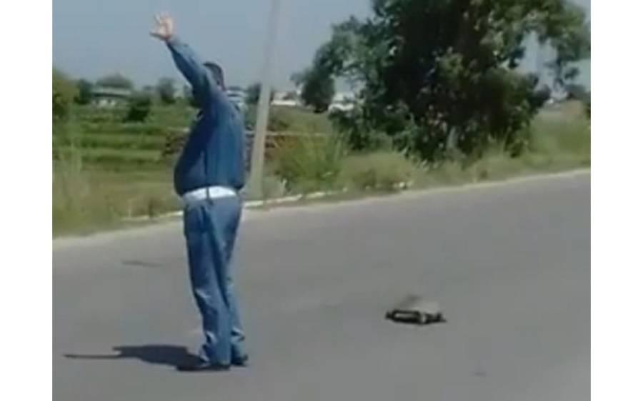 ایک کچھوے کو سڑک پار کروانے کے لیے ٹریفک روکنے والے پاکستانی وارڈن کی ویڈیو وائرل، شہریوں کے دل جیت لیے