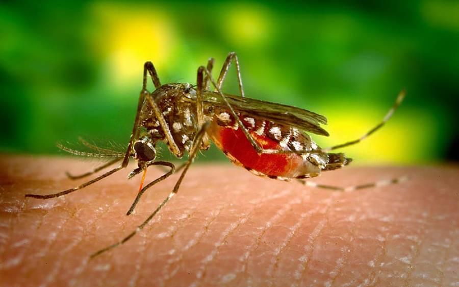 ڈینگی نے پاکستانیوں کو کورونا وائرس سے بچالیا؟ تازہ تحقیق میں حیران کن انکشاف سامنے آگیا