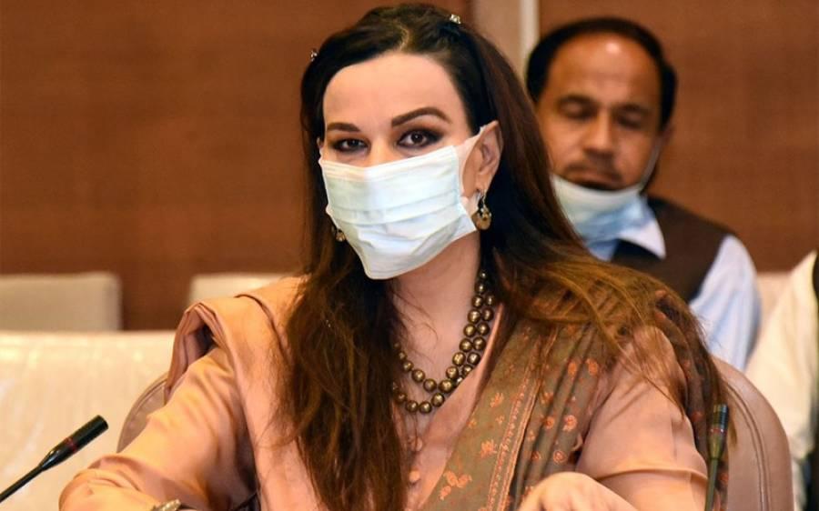 پبلک اکاؤنٹس کمیٹی میں پی سی بی چیئرمین کس بات کی تکرار کرتے رہے؟سینیٹر شیری رحمن نے اجلاس کی اندرونی کہانی بیان کردی