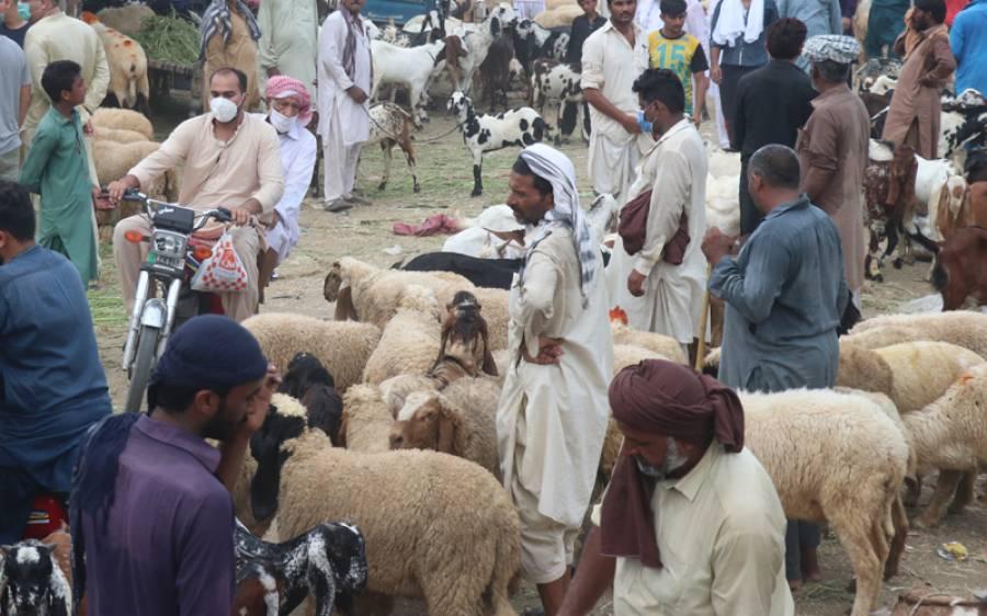 بھیڑوں کی افزائش سے غربت سے نجات