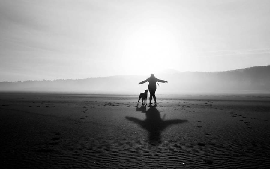بیٹے سے تنگ باپ اپنی وصیت میں جائیداد اپنے کتے کے نام کرگیا