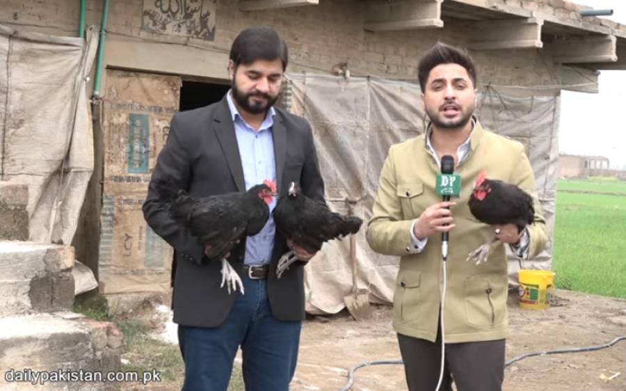 پاکستان میں آسٹریلین مرغیوں کا کاروبار، نوجوان نے 12 لاکھ روپے لگا کر کروڑوں کا بزنس بنا لیا