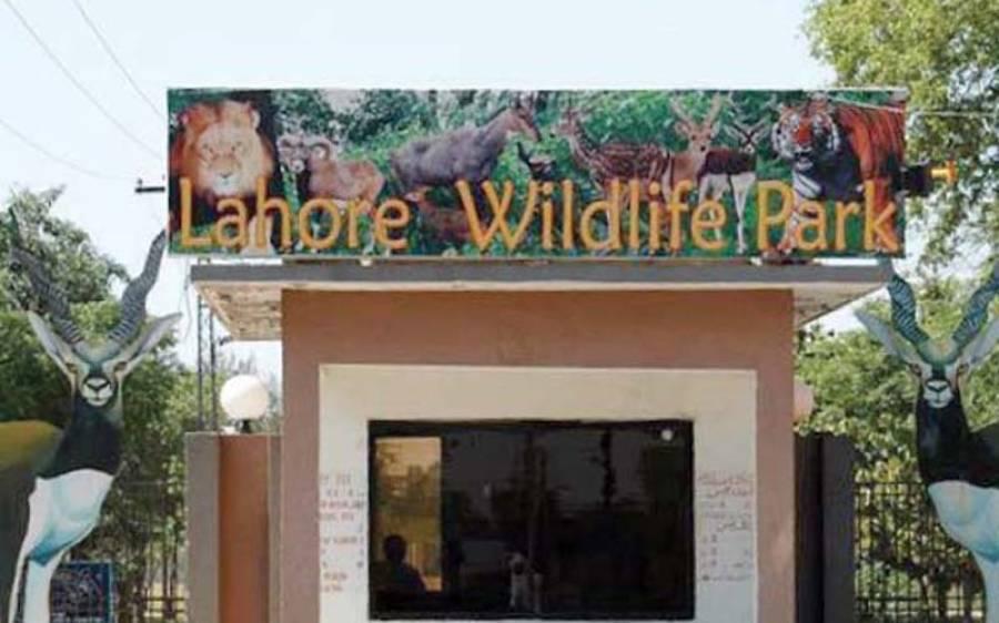 لاہور سفاری پارک سے چار انتہائی قیمتی جانور چوری کر لیے گئے ، حیران کن واقعہ