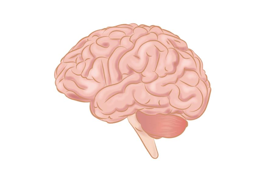 بڑھاپے میں دماغ کو تندرست رکھنا ہو تو جوانی میں کیا کھانا چاہیے؟ سائنسدانوں نے بتادیا