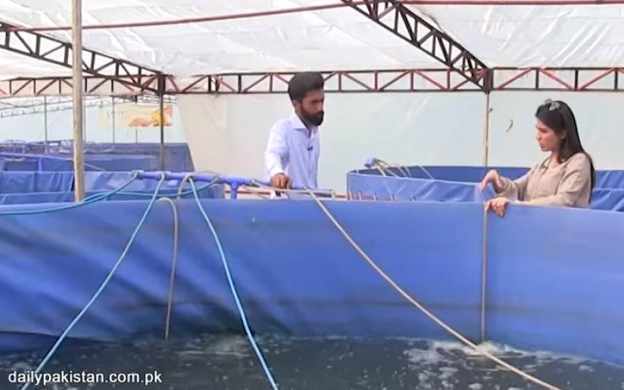 جدید ٹیکنالوجی کے ذریعے مچھلیاں پال کر پاکستانی نوجوان پانی کی چھوٹی سی ٹینکی سے لاکھوں روپے کمانے لگا
