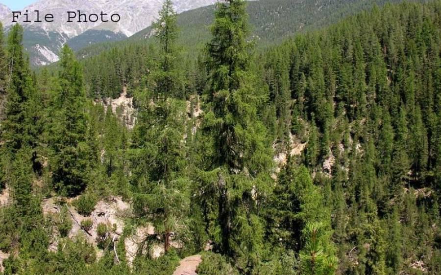 آسٹریلیا کا پاکستان کو ' میاواکی 'جنگل کا تحفہ