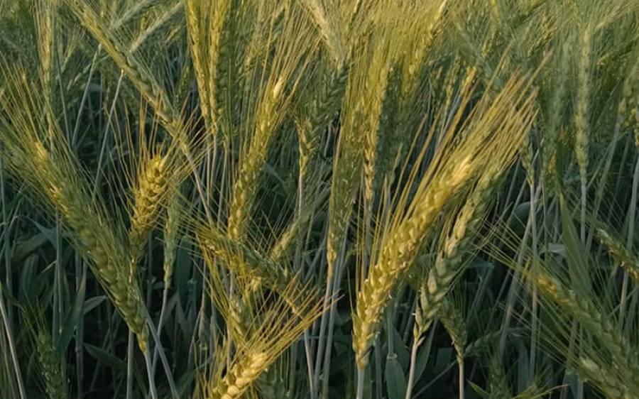 خریف کی فصل کیلئے پانی کی کتنی کمی کا سامنا ہو گا ؟ ارسا نے خبردار کر دیا