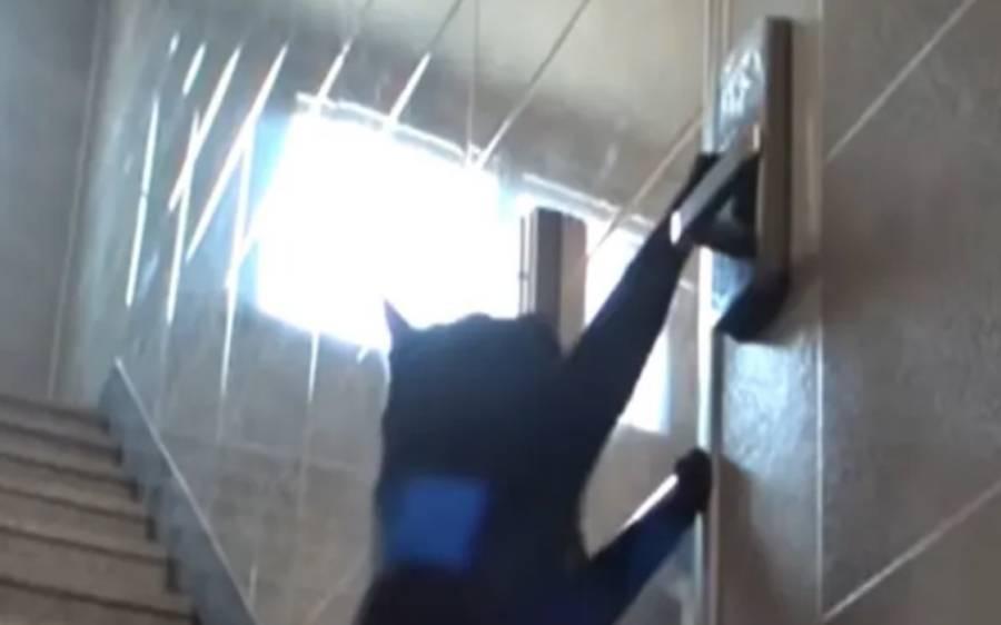 بلی کے دروازے کا پاس ورڈ لگا کر گھر میں داخل ہونے کی ویڈیو نے تہلکہ مچادیا