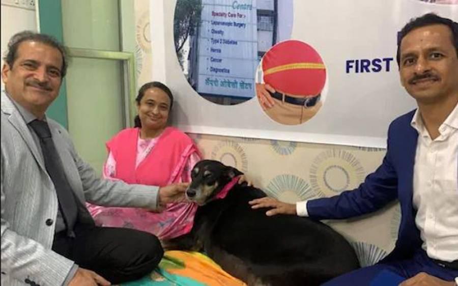 موٹاپے کا شکار 50 کلو وزنی کتے کی سرجری