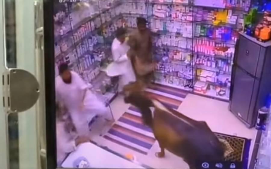 دکان میں با جماعت نماز کی ادائیگی کے دوران بیل گھس آیا اور پھر۔ ۔ ۔