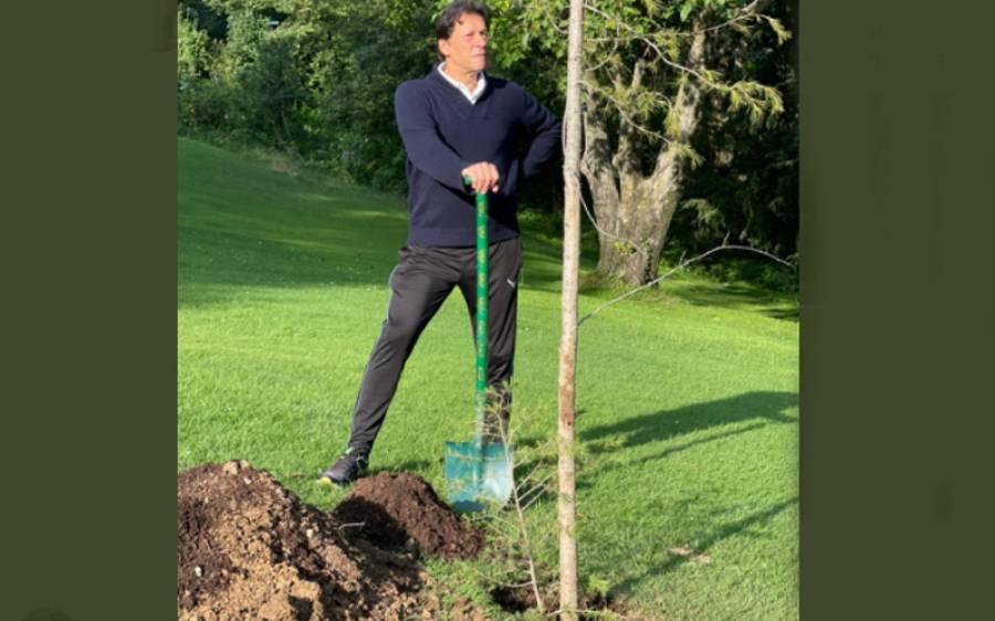 وزیر اعظم نے نتھیا گلی میں چیڑ کا پودا لگا کر تصاویر سوشل میڈیا پر شیئر کر دیں