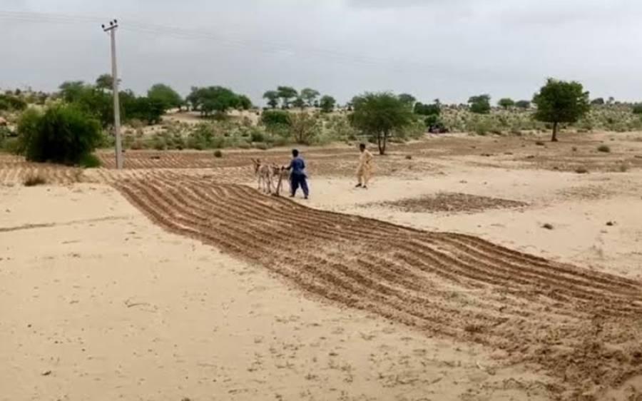 صحرائے تھر کے بھی مختلف علاقوں میں بارش، فصلوں کی کاشت شروع