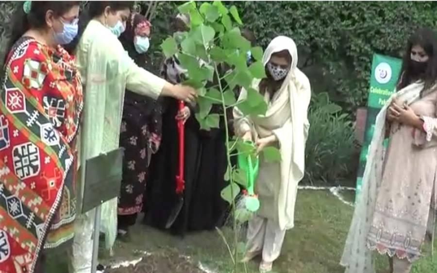 وزیراعلی پنجاب کی اہلیہ بھی شجر کاری مہم میں پیش پیش ، پودا لگا کر شجرکاری مہم کا آغاز کردیا