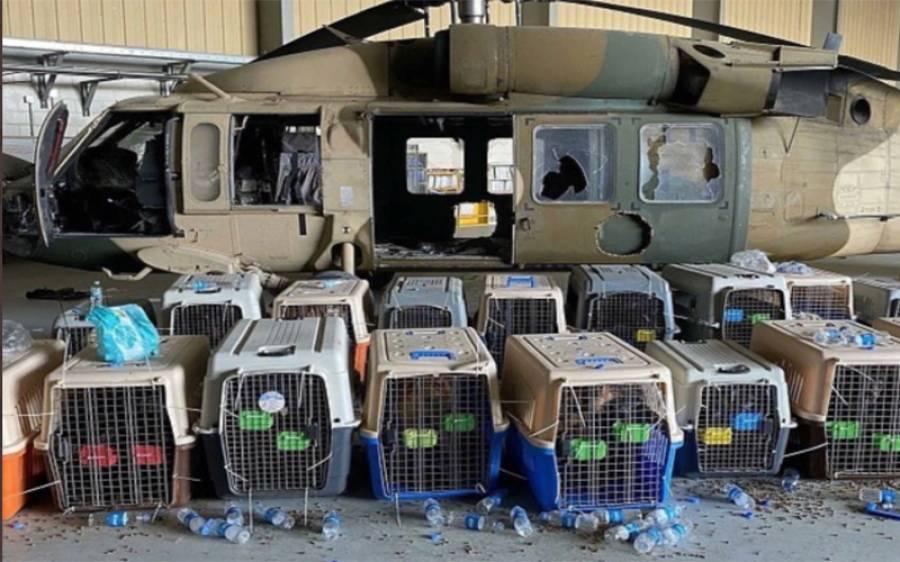 امریکی فوجی اپنے کتے افغانستان میں چھوڑ گئے