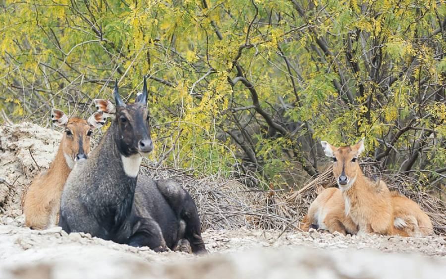سندھ میں جنگلی حیات کاتحفظ ، محکمہ وائلڈ لائف نے بڑا قدم اٹھا لیا