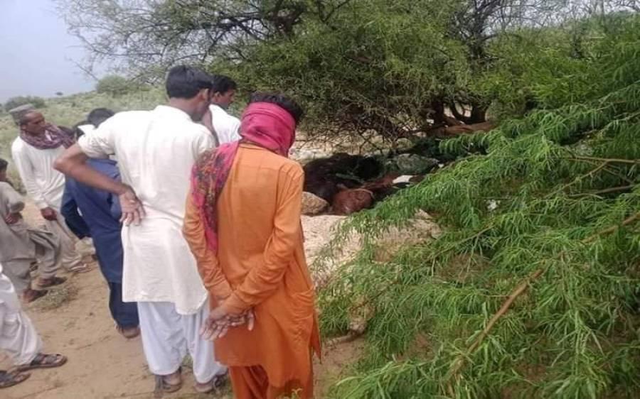 اندرون سندھ میں آسمانی بجلی گرنے سے پانچ افراد جاں بحق، 50 جانور ہلاک، انتہائی افسوسناک خبر آگئی