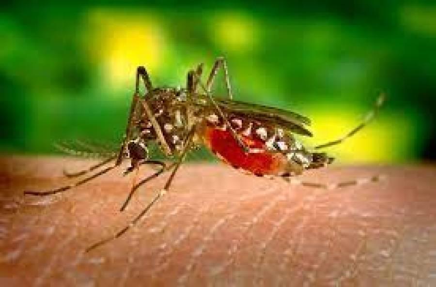 کورونا کےبعد ڈینگی وائرس میں بھی جینیاتی تبدیلی کا انکشاف، ماہرین نے پریشان کن خبردیدی