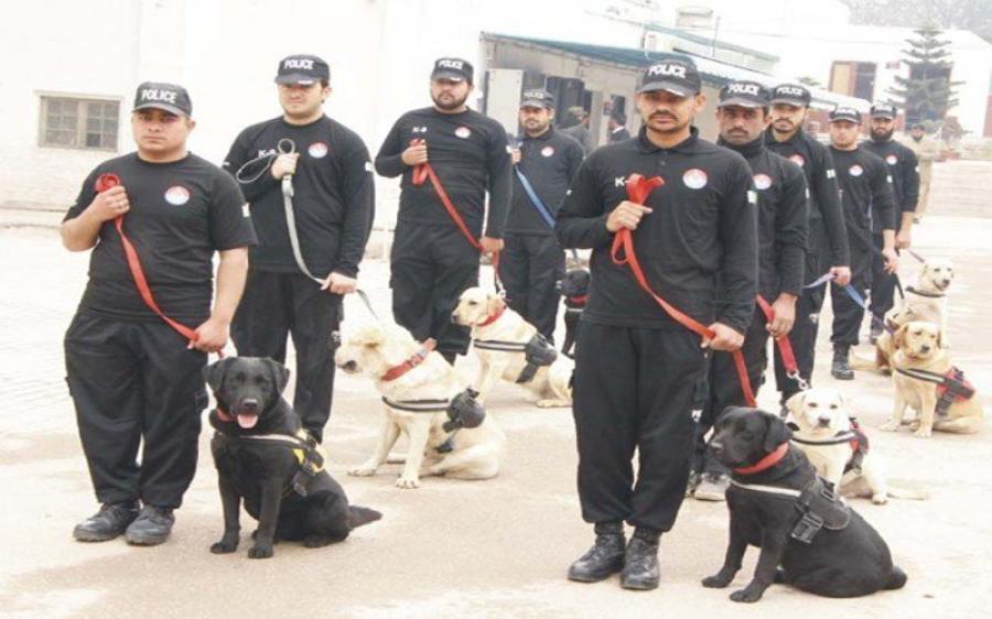 سپیشل برانچ کے پاس سراغ رساں کتوں کی تربیت کرنے والے عملے کی شدید کمی ، 255 میں سے 181 سیٹیں خالی
