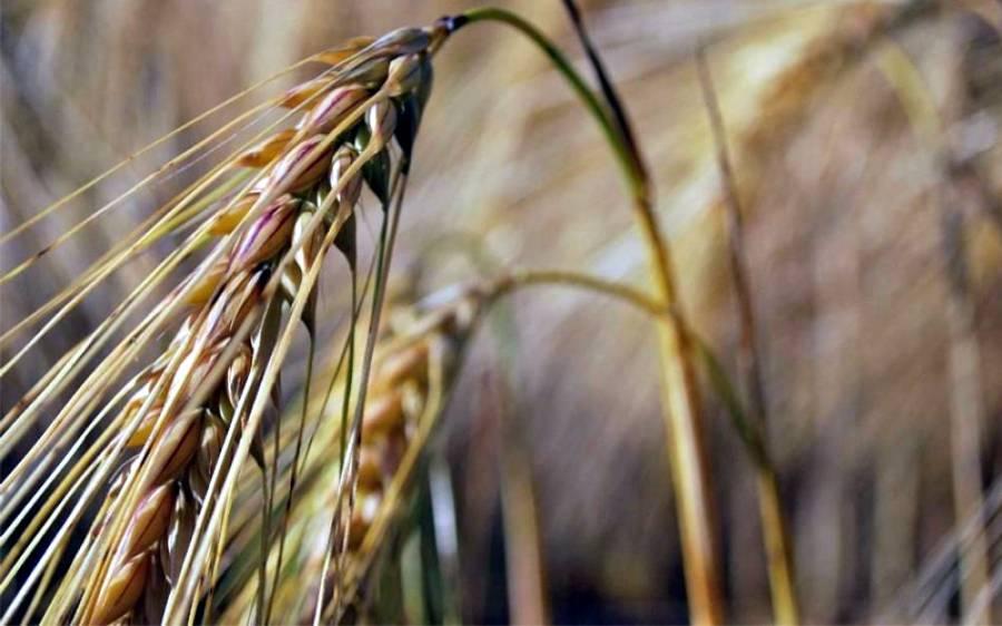 کسانوں کے مسائل ترجیحی بنیادوں پر حل کرنے کیلئے پاکستان سیٹیزن پورٹل پر خصوصی کیٹیگری الاٹ