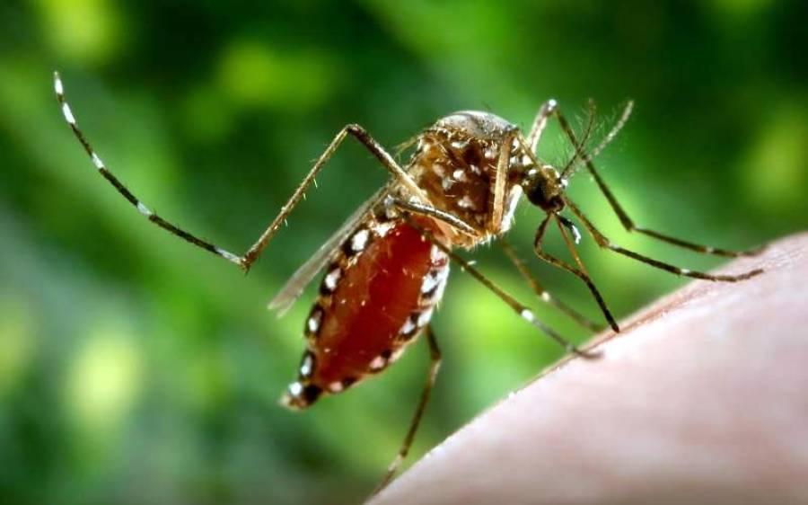 ڈینگی مچھر نے خطرے کی گھنٹی بجا دی ، ملک بھرسے بڑی تعداد میں کیسز سامنے آنے لگے