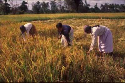 سندھ اور پنجاب کی فصلوں کو کمی کا سامنا کرنا پڑے گا
