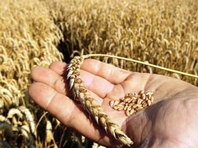 گندم کی کمی یوٹیلیٹی سٹورز پر آٹے کے بحران کاسبب ہے: ایم ڈی