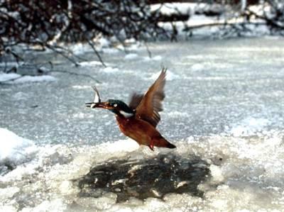برف باری سے پرندے بھی' اسامہ' بن گئے