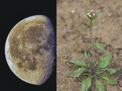 امریکی خلائی ادارہ چاند پر پودا لگائے گا