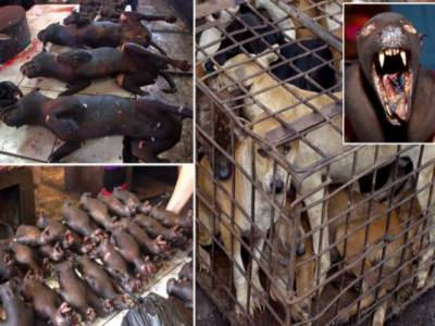 انڈونیشیا میں بلیاں ، کتے روسٹ ہونے لگے