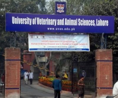 یونیورسٹی آف ویٹرنری اینڈاینیمل سائنسز میں سپرنگ فیسٹیول