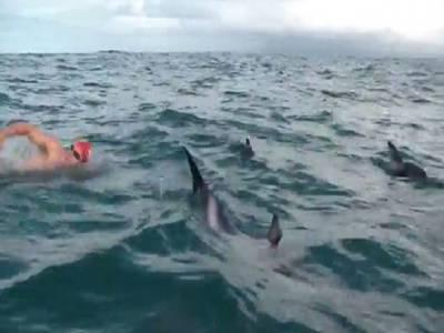 انسان دوست مچھلی ڈولفن نے برطانیہ کے تیراک والکر کو شارک مچھلی سے بچا لیا