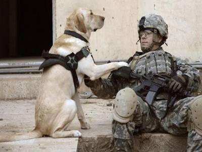افغانستان کی جنگ میں ہلاک ہونیوالی فوجی کتیا کو اعلیٰ ترین عسکری ایوارڈ دینے کا فیصلہ
