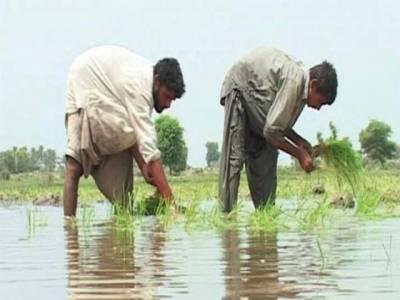 سندھ: کسانوں کوبھی حقوق مل گئے