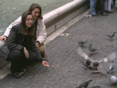 کبوتروں کو دانہ ڈالنا منع
