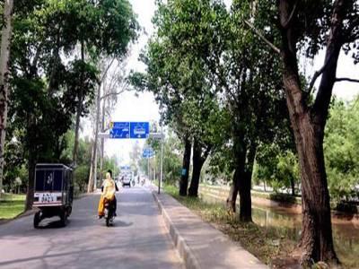 ایئرپورٹ تا جاتی عمرہ، درخت اور سائن بورڈ سیکیورٹی رسک قرار