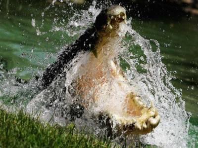 دنیا کے دس انتہائی خطرناک جانور