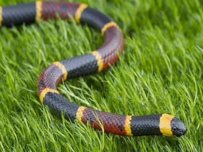 بدقسمت امریکی،سانپ کا ڈنگ بھی کھایا اور جیل بھی جائے گا