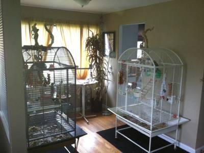 پرندوں کے گیت گھر کی مالیت بڑھادیتے ہیں:تحقیق