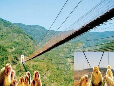 آمدورفت میں مشکل، چین میں بندروں کے لئے آٹھ کروڑ روپے کا پل تعمیر