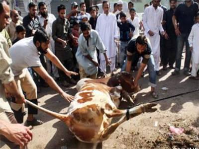 عیدالاضحی پر قصابوں کے ساتھ اناڑی بھی میدان میں اتر آئے