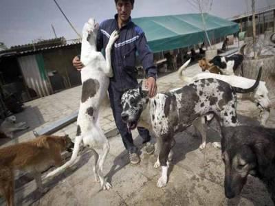 ایران میں کتا پالنے پر کوڑوں اور جرمانے کی سزا کیلئے قانون سازی شروع