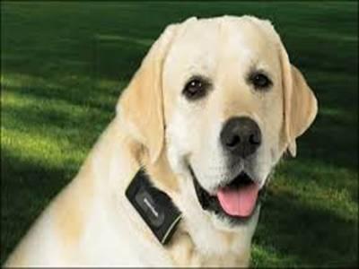 کتے کی خاطر قانون تبدیل