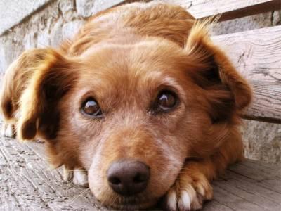 کتا چوری کرکے ہلاک کرنیوالی خاتون کو نظر بند کردیا گیا