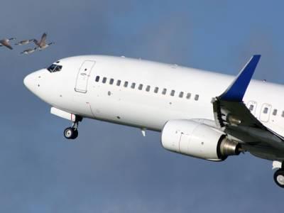 پرندے ہوائی جہازوں سے کیوں ٹکراتے ہیں؟ تحقیق میں حیرت انگیز وجہ سامنے آگئی